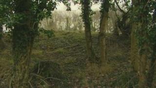 Bathwick Woods