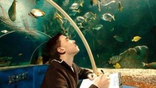 Aquarium stock take