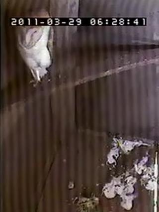 """CCTV picture of a barn owl inside a """"super-sized"""" home at a farm in Down Ampney"""