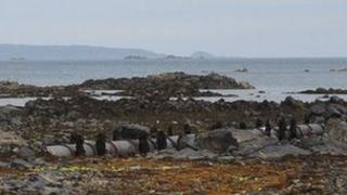 Sewage pipe on Guernsey's East coast