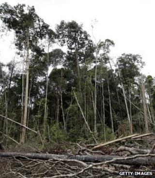 Degraded tropical forest (Getty Images)