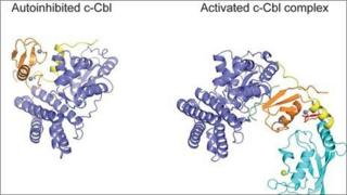 3D images of the protein c-Cbl