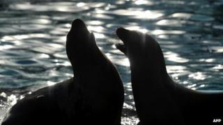 Sea lions (file photo)
