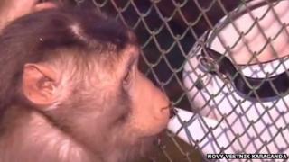 A monkey drinking diluted wine from a kettle at the Karaganda Zoo (still from video via Novy Vestnik Karaganda)
