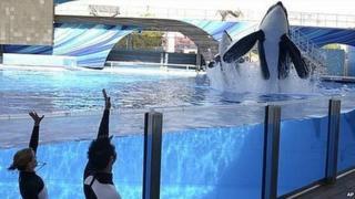 Two SeaWorld killer whales