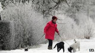 A woman walks her dogs in the snow in Malton, North Yorkshire