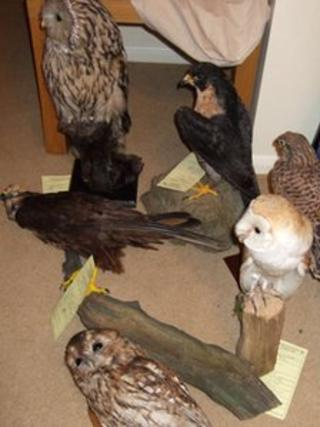 Some of the birds seized by police