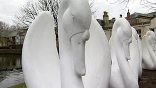 Swans of Wells