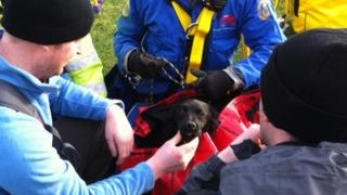 Lulworth and Wyke coastguard rescue workers with Lily the cocker spaniel
