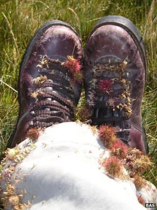 Scientist's boots covered in bits of plant