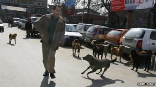 Stray dogs in Srinagar