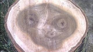sawn log's grain pattern