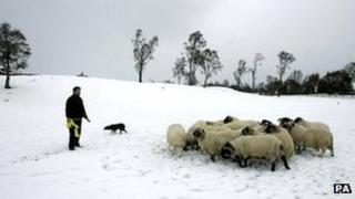 Sheep farmer in Scotland
