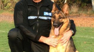 Aman, winner of 'Hero Service Dog'