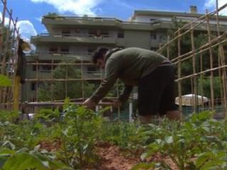A man works on his allotment in the Athens suburb of Marousi