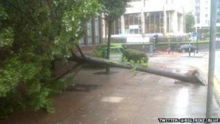 High winds brought down a tree on Newport Road in Cardiff city centre