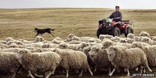 Farmer in the Falklands Islands