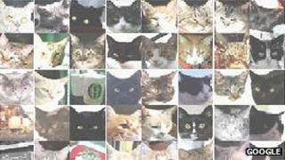 Cat head shots