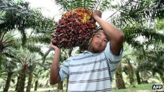 A worker carrying palm oil fruit