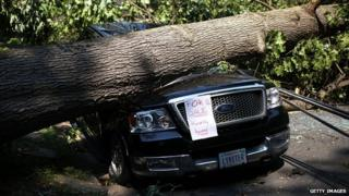 Car crushed by fallen tree.