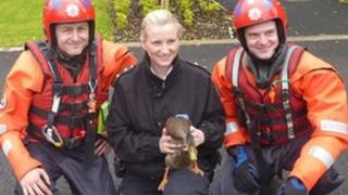 Greater Manchester Fire and Rescue Service crew with rescued duck
