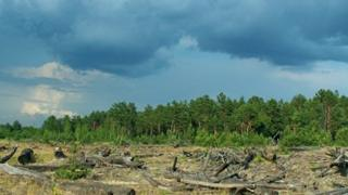 Chernobyl forest