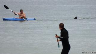 Man's lucky escape from great white shark.