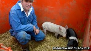 Guy Kiddy and piglets