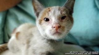 Kitten Ni Hao