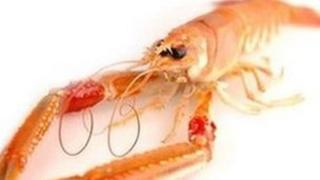 Scottish langoustine. Pic: Supplied by Mallaig and Northwest Fishermen's Association