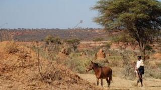 Grazing land - archive pic