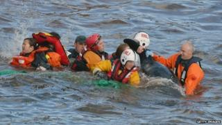 Rescuers help the stranded whales