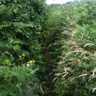 An overgrown footpath