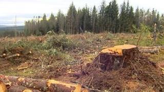 Caledonian pinewoods