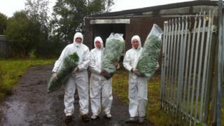 Milton cannabis farm