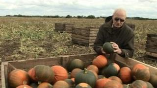 Farmer with pumpkins which are not turning orange