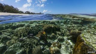 Lady Elliot Island, Great Barrier Reef