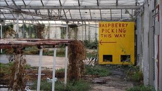 Guernsey's Strawberry Farm in St Saviour
