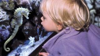 Girl with seahorse at a Sea Life centre