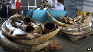 Hong Kong customs officials display the seized ivory tusks. Photo: 20 October 2012
