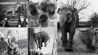 Travelling menageries brought exotic animals to English towns and cities