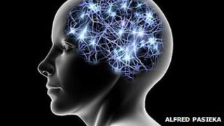 Neural connections in brain
