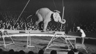An elephant at a circus