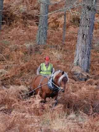 Tarzan the logging horse