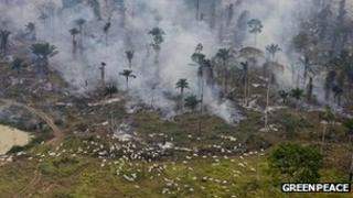 Man-made fires to clear land for farming in Sao Felix Do Xingu Municipality, Para, Brazil