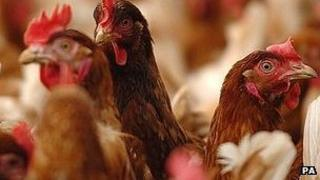 Generic image of chickens