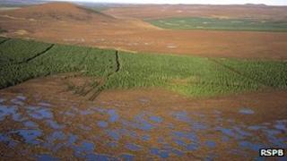 Bog pools and conifer plantation at the Forsinard RSPB reserve