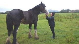 Corra the clydesdale horse with her owner