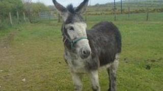 Mary the donkey