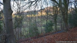 Trantershill Wood, in the Slad Valley